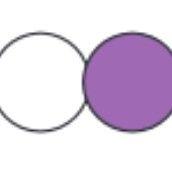 bílá/fialová